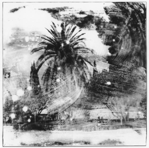 CO04 Palmier dans le vent